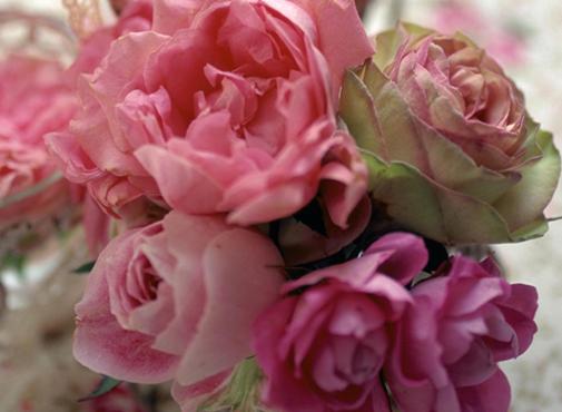 ★薔薇のような時間★_c0156749_18274288.jpg
