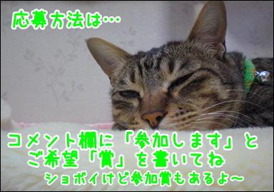 d0139352_0564160.jpg