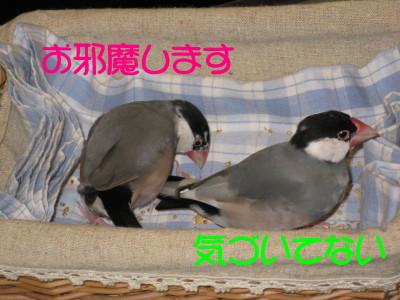 b0158061_19223838.jpg
