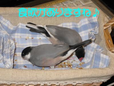 b0158061_19235663.jpg