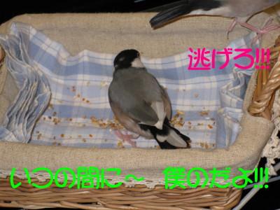 b0158061_1923576.jpg