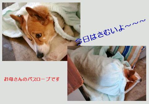f0003174_16101830.jpg
