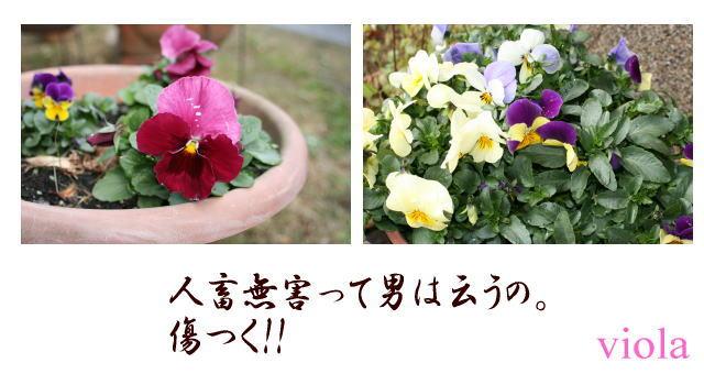b0136683_2134273.jpg