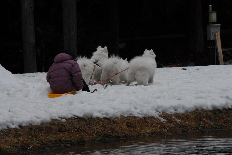 雪遊びに行ってきました♪  んまいもん&ソリ遊び編_a0049296_6441657.jpg