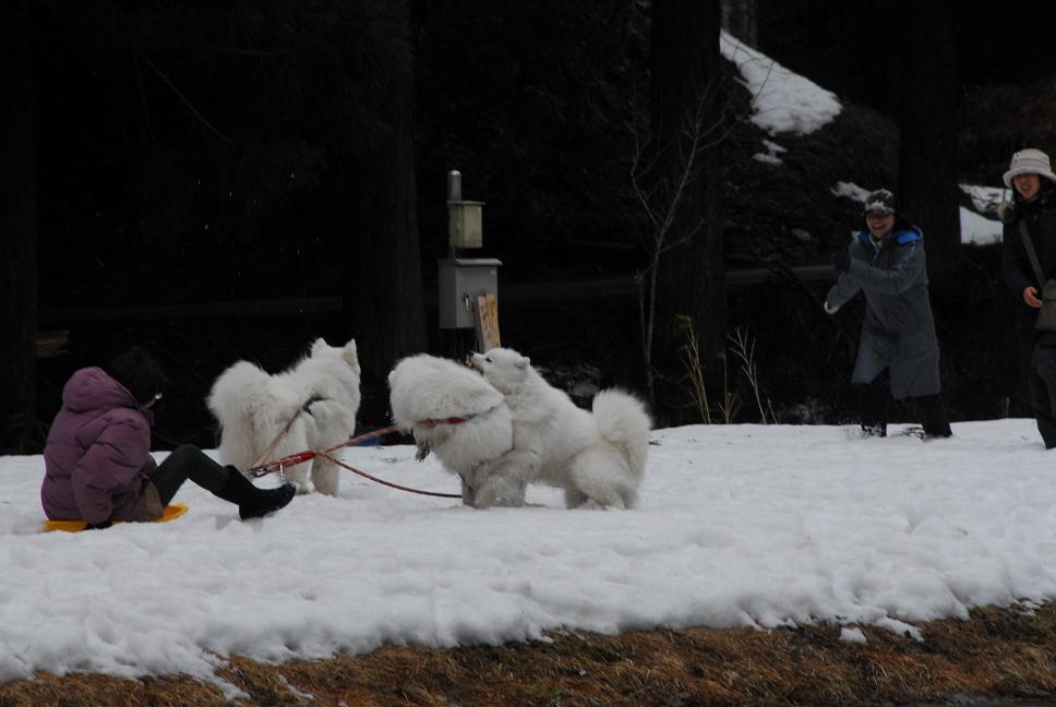 雪遊びに行ってきました♪  んまいもん&ソリ遊び編_a0049296_6451420.jpg