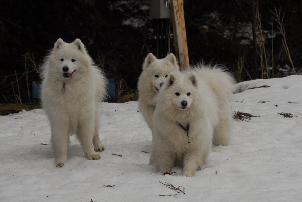 雪遊びに行ってきました♪  んまいもん&ソリ遊び編_a0049296_6494048.jpg