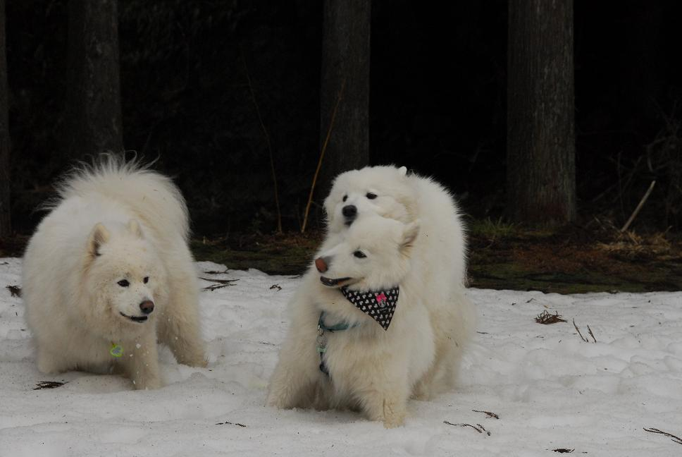 雪遊びに行ってきました♪  んまいもん&ソリ遊び編_a0049296_6495590.jpg