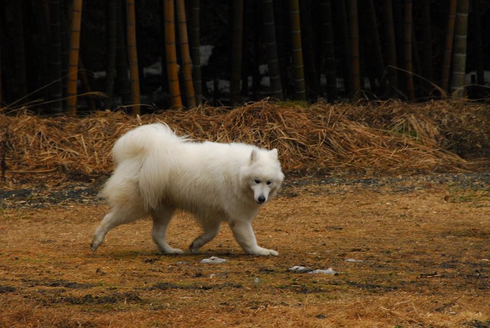 雪遊びに行ってきました♪  んまいもん&ソリ遊び編_a0049296_6502323.jpg