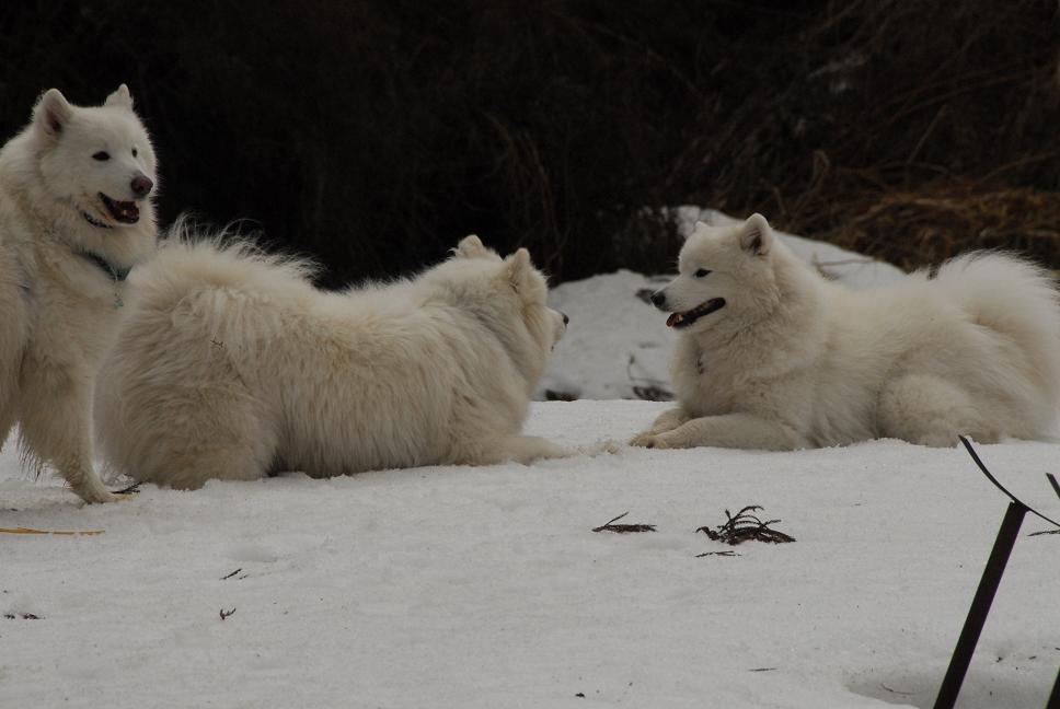 雪遊びに行ってきました♪  んまいもん&ソリ遊び編_a0049296_650894.jpg