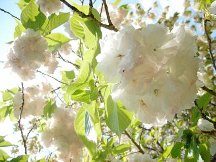 桜時間_d0051613_16381790.jpg