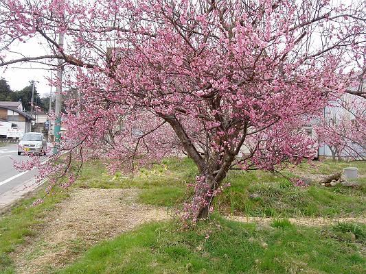 春はそこまで来ています。_f0164630_15455679.jpg