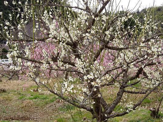 春はそこまで来ています。_f0164630_15462437.jpg