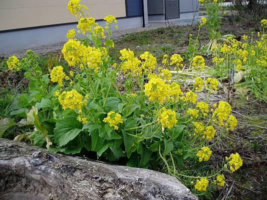 春はそこまで来ています。_f0164630_1547725.jpg