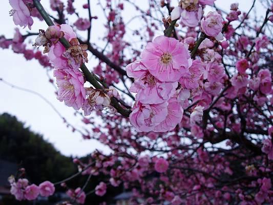 春はそこまで来ています。_f0164630_1641743.jpg