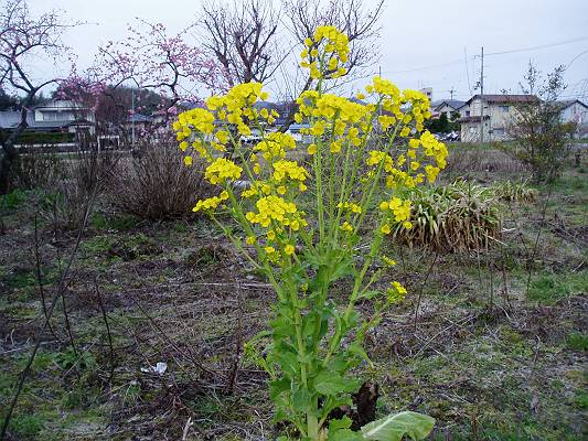 春はそこまで来ています。_f0164630_165474.jpg