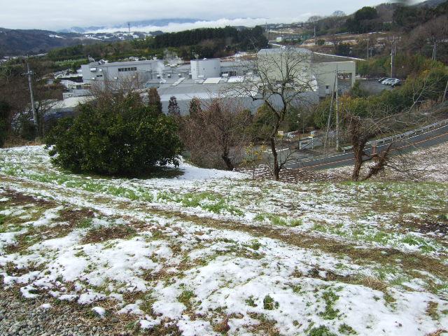 雪の中ジャガイモの植え付け......._b0137932_18343973.jpg