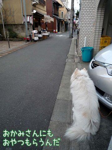 晴れ晴れ散歩_c0062832_1794010.jpg