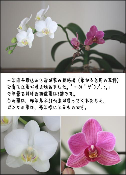 b0066947_20531534.jpg