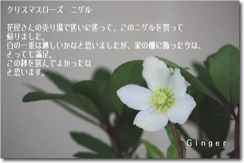 b0066947_21124139.jpg