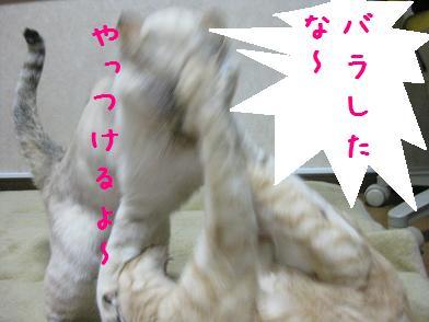b0151748_13223712.jpg