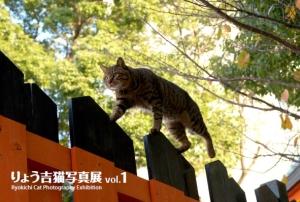 『りょう吉猫写真展vol.1』のごあんない_c0136217_16491417.jpg