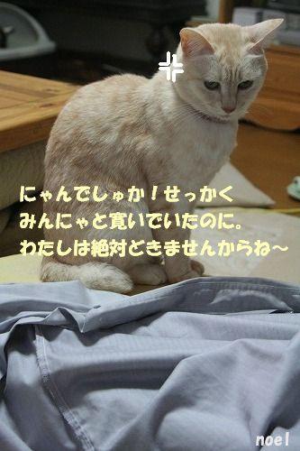 f0063729_20455354.jpg