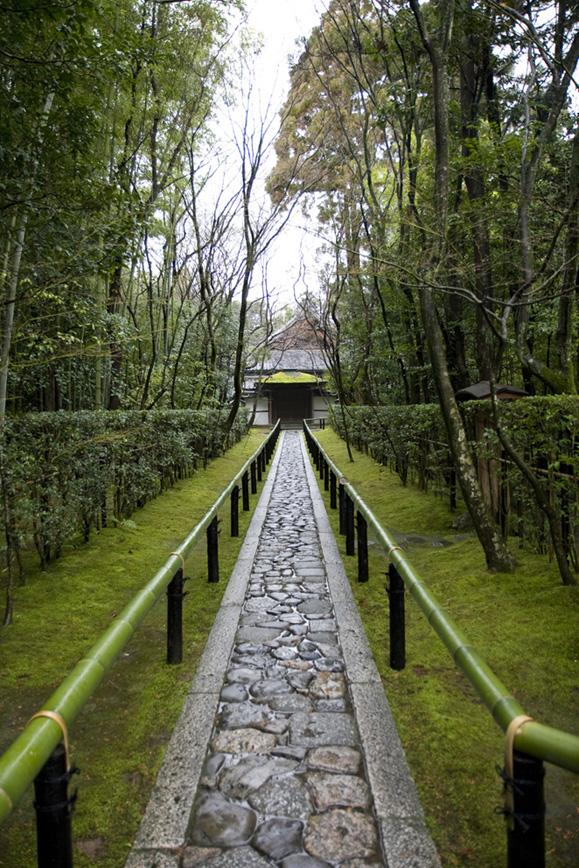 冬の京都 大徳寺 高桐院 楓と苔 _e0127948_19362128.jpg