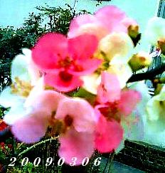 c0050857_10212687.jpg