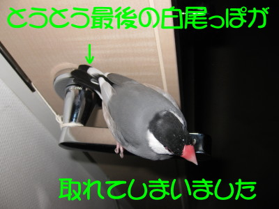 b0158061_20262850.jpg