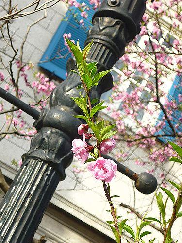英国アンバサダープログラム。。。British Embassy Tokyo ☆A Taste of Britain♡* *。:☆.。†_a0053662_8493948.jpg