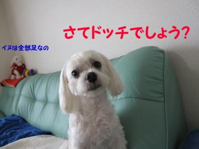 f0145192_16241048.jpg