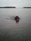 アメニモマケズ 海へ_b0084194_16271012.jpg