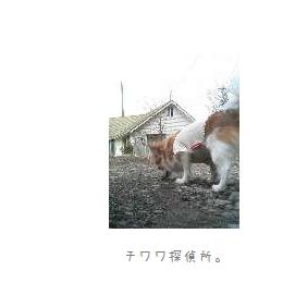 b0120001_2221957.jpg