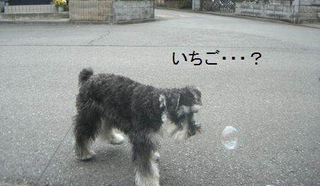 f0197317_17394368.jpg