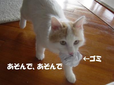 c0195250_741268.jpg