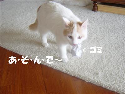 c0195250_743049.jpg