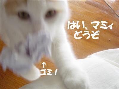 c0195250_75423.jpg