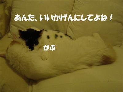 c0195250_821993.jpg