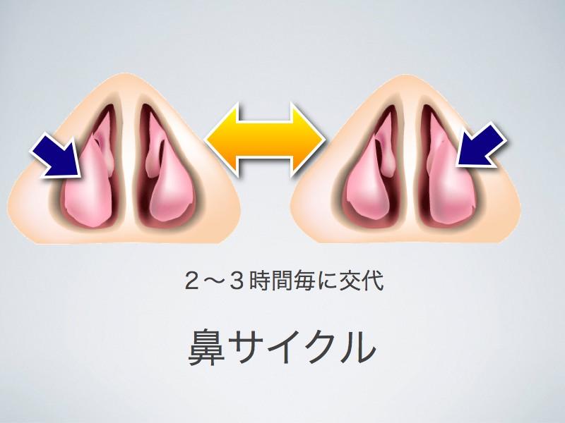 鼻サイクル_e0084756_034648.jpg