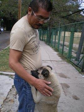 sunnyさんとキューバ犬_d0041268_16164095.jpg