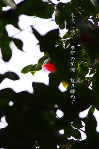 b0146278_2047916.jpg