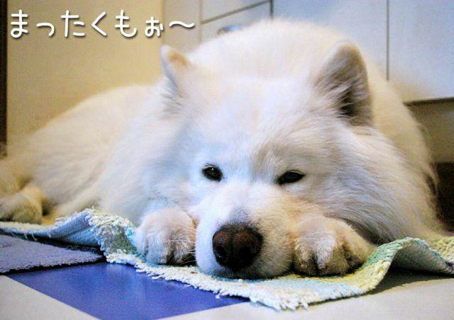バンジオケー!_c0062832_1714481.jpg