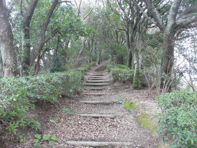 諏訪崎を歩きました♪_f0099147_875542.jpg
