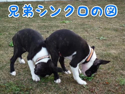 f0166359_2213857.jpg