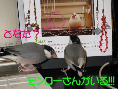 b0158061_2181369.jpg