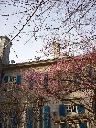 高円宮妃久子さまも ご一緒の 優雅な Afternoon Tea Party at 英国大使館公邸。。。* *。:☆.。†_a0053662_12134053.jpg