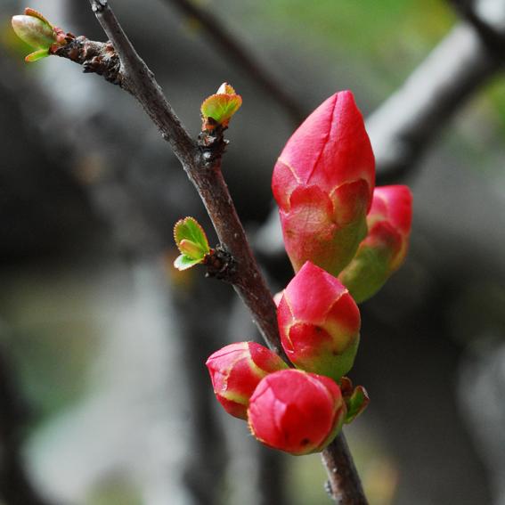 春の予感_f0099102_0405711.jpg