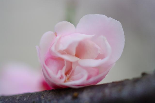 梅の香り2_f0050534_0422396.jpg