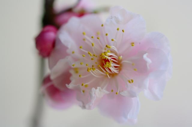 梅の香り2_f0050534_042387.jpg