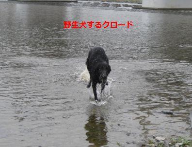 b0148945_1654173.jpg